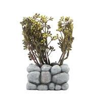 Fluval - Chi Stenmur med växt