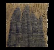 Arstone - Slimline Amazon 60B