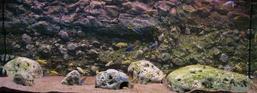 RockZolid - Sandstone 158x58cm