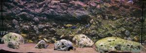 RockZolid - Sandstone 128x48cm