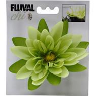 Fluval - Chi Näckros