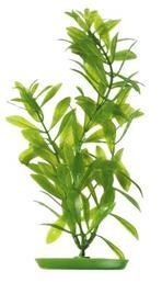 Marina - Hygrophila Polysperma 20cm