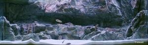 RockZolid - Timor 198x58cm