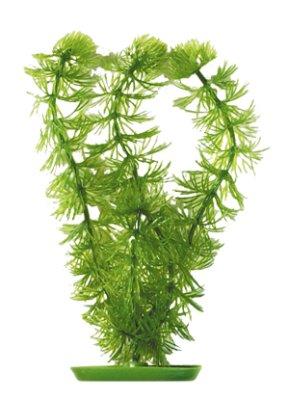 Marina - Ceratophyllum (Hornwort) 20cm