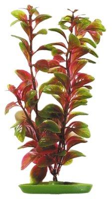 Marina - Röd Ludvigia 20cm